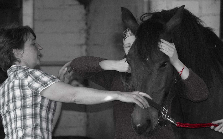 Wir lehren Veterinär-Chiropraktik - BackBone-Academy for Veterinary ...